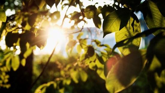 NCC bryr seg om miljøet og har identifisert flere veier frem mot et mer bærekraftig selskap.